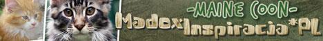 Madoxinspiracja*PL - Hodowla Kotów Maine Coon